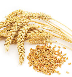 Picof Wheat